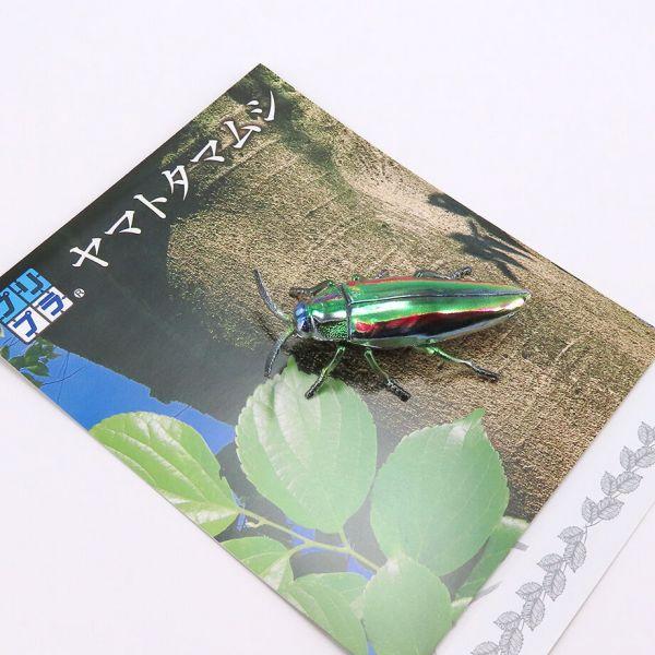 M.I.C. 彩虹吉丁蟲 組裝模型 M.I.C.,彩虹吉丁蟲,組裝模型,