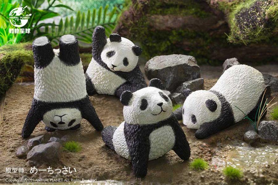 動物星球 盒玩 瑜伽熊貓 全4+1隱藏款 一中盒隨機5入販售 動物星球,盒玩,瑜伽熊貓,全4+1隱藏款,一中盒隨機5入販售,