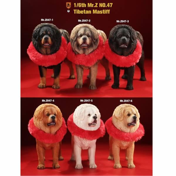 Mr.Z 老朱 1/6 模擬動物模型第47彈 藏獒犬 全6種 分別販售 Mr.Z,老朱,模擬動物模型,藏獒犬