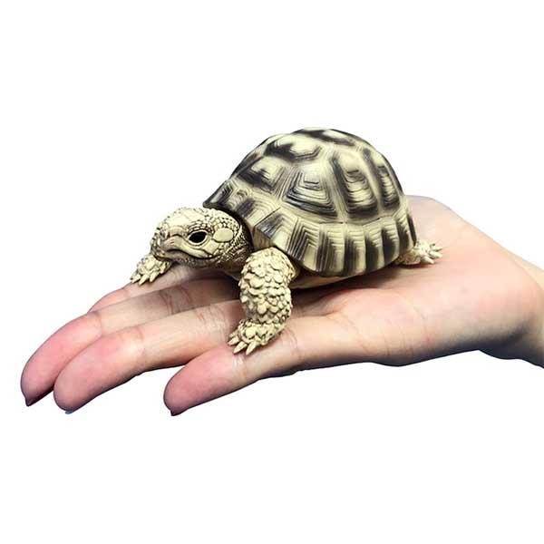 BANDAI 扭蛋 可動烏龜造型轉蛋 全4種 隨機4入販售 BANDAI,扭蛋,轉蛋,可動烏龜造型轉蛋
