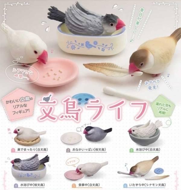 EPOCH 扭蛋 文鳥的日常生活 全6種 隨機5入販售  EPOCH,扭蛋,文鳥的日常生活,全6種 隨機5入販售,