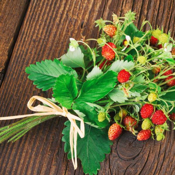 糖果草莓 光盒植栽 LED 小夜燈 小夜燈,氣氛燈,植栽燈,糖果草莓,草莓,種草莓,禮物,交換禮物,生日禮物,園藝