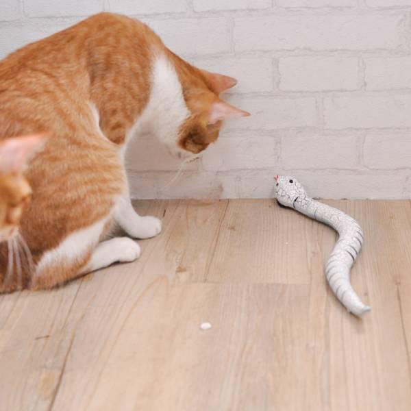 【主子跟著向前衝】遙控玩具蛇