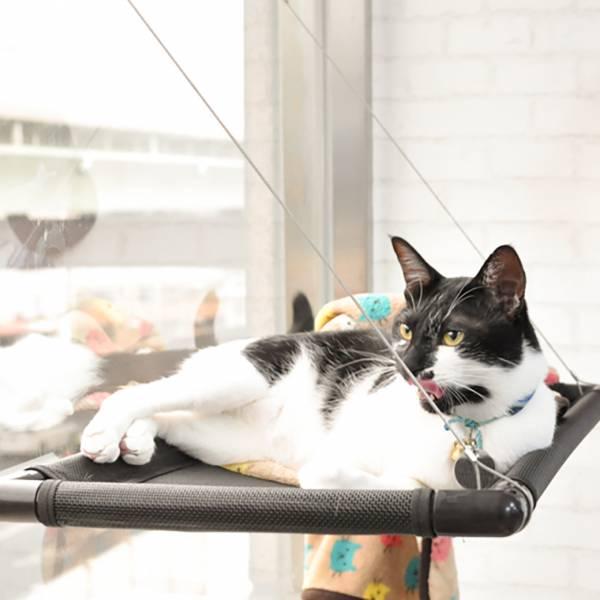 【貓兒懂享受】貓吊床觀景台 貓吊床,觀景台,貓奴,主子,貓窩