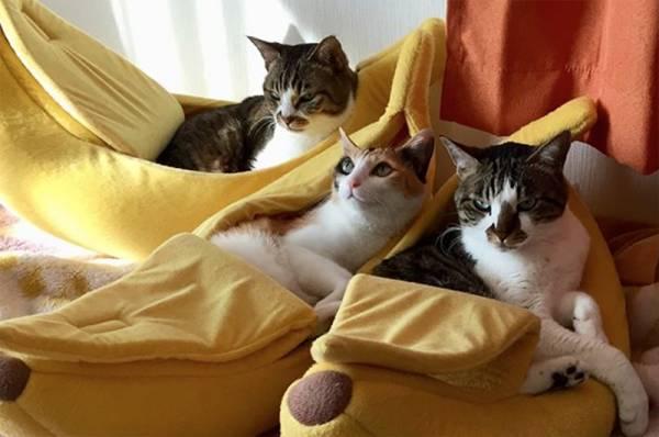 【划著一條香蕉船】貓窩 貓睡窩,竉物用品,貓窩