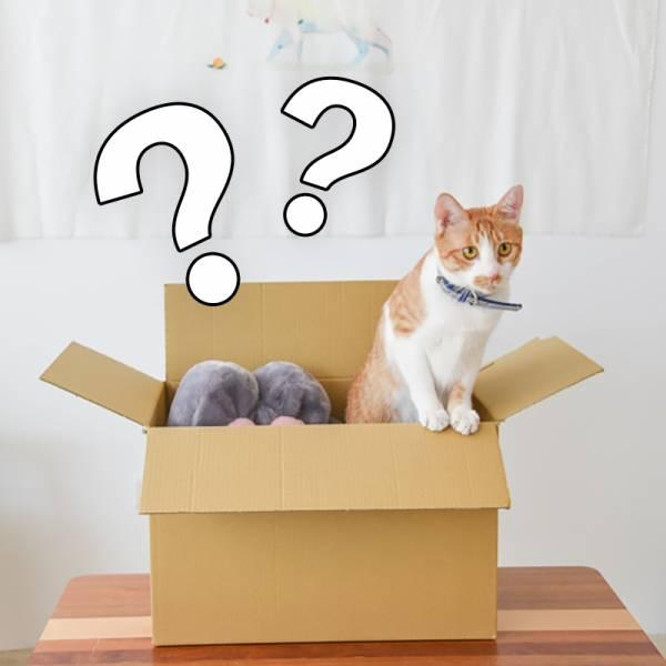 小福箱【想要貓貓大福箱】充滿驚喜、物超所值