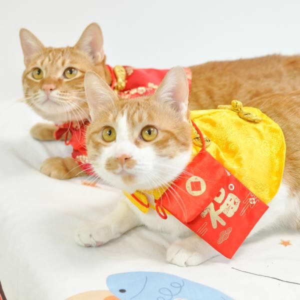 【牛年幸福招財喵】貓咪新年紅包披風