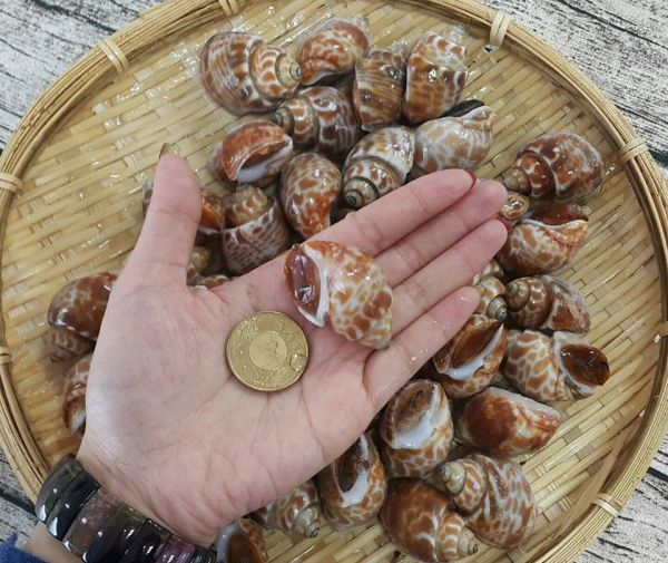 鳳螺每包約30~50顆,1kg 加碼送阿順師胡椒粉一包