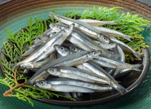 日本丁香魚500g /盒