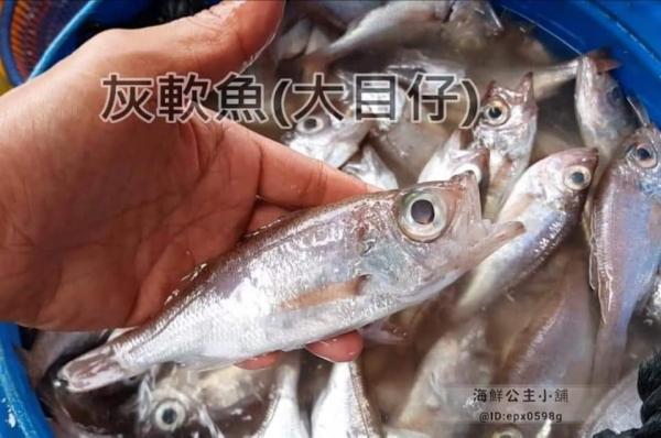 現撈極鮮★特級現撈大目仔【7~10尾裝/450g】★平價美味,超值饗宴!
