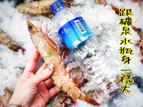 (免運專案) 野生超大肥豬蝦   (淨重950g 10~12隻)
