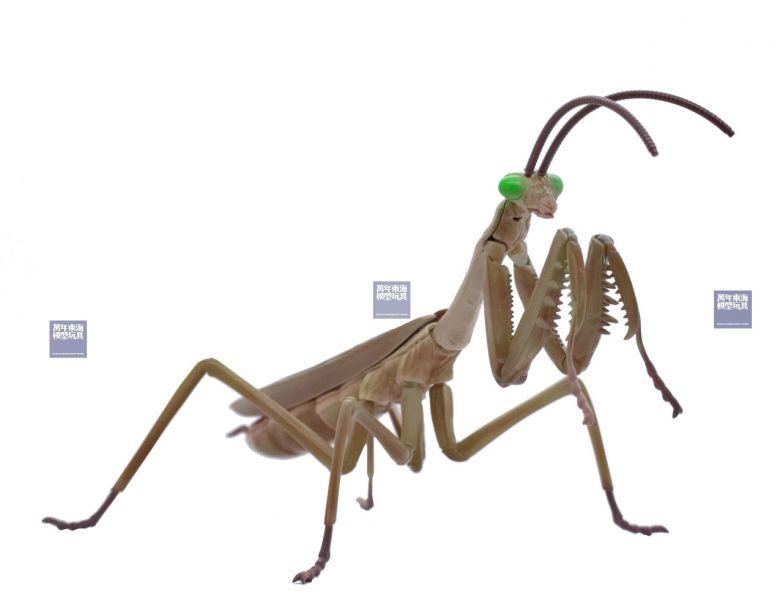 大刀螳螂 茶色 FUJIMI 自由研究23EX1 生物編 富士美 組裝模型 FUJIMI,富士美,自由研究,生物,獨角仙,鍬形蟲,大刀螳螂,茶色,