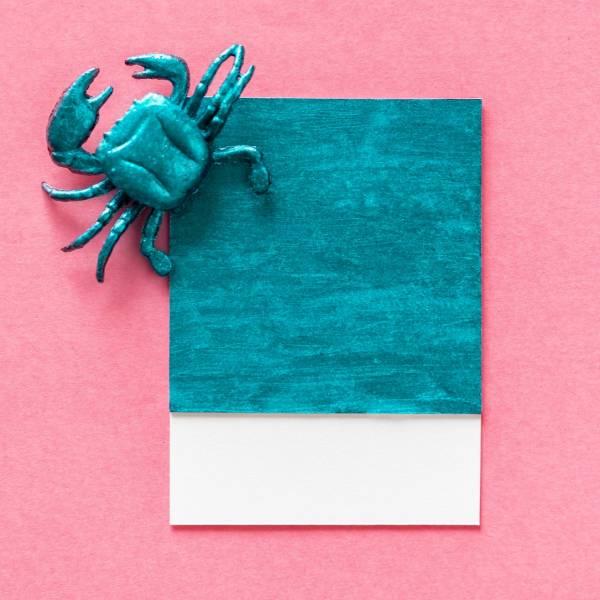 《螃蟹 小卡》