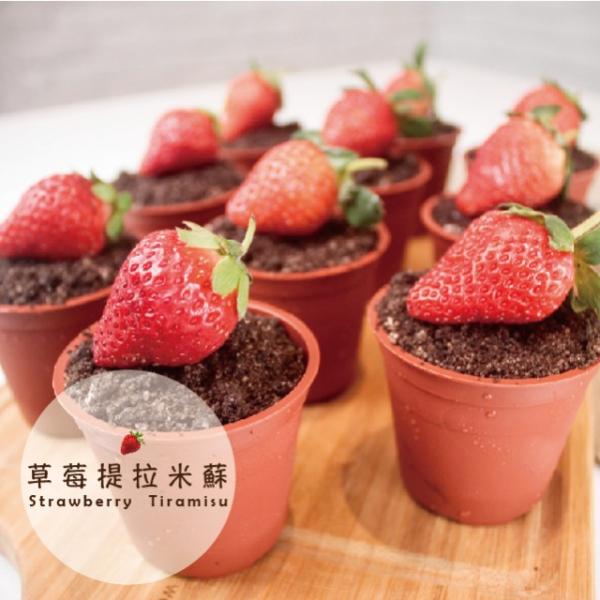 草莓盆栽堤拉米蘇(10入/盒) 草莓,提拉米蘇,蛋糕