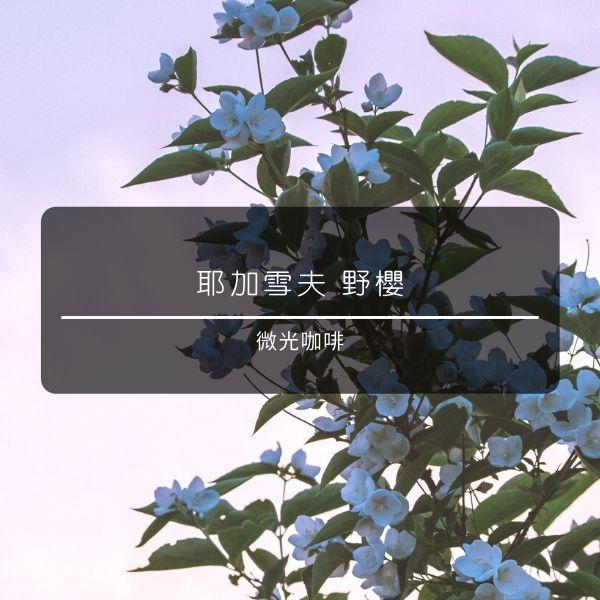 【微光咖啡】 耶加雪夫 野櫻 咖啡豆 微光咖啡, 耶加雪夫, 野櫻, 咖啡豆