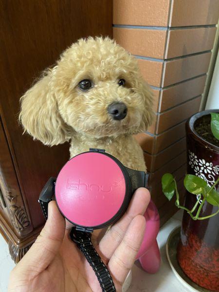 【使用者體驗推薦文】體驗-寵物 Lishinu2 利斯努第二代 腕式伸縮牽繩|帶狗狗出門玩再也不怕手忙腳亂