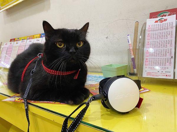 【使用者體驗推薦文】遛貓囉!Lishinu2利斯努第二代~腕式伸縮牽繩開箱文!