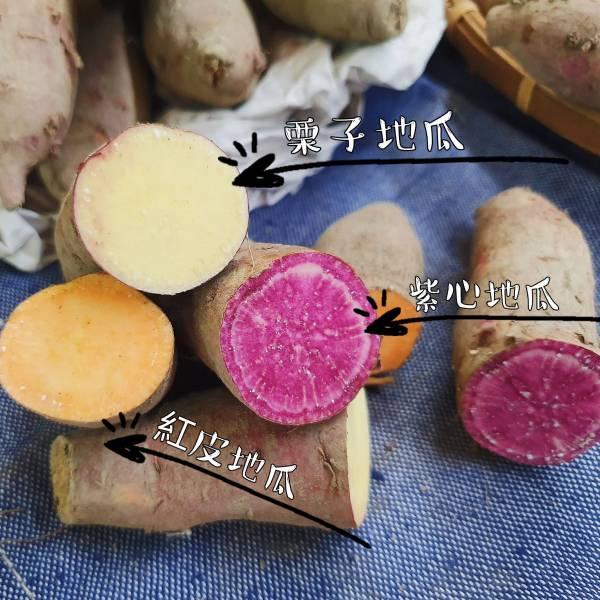 好吃的新鮮地瓜-紅皮地瓜/栗子地瓜/紫心地瓜