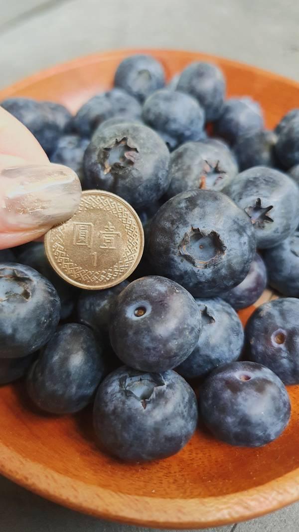 空運藍莓-優惠