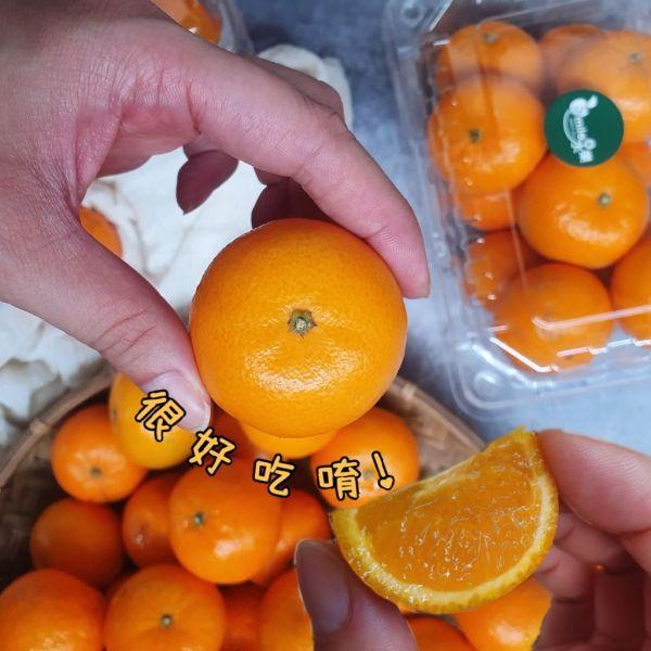 買一送一 - 南非砂糖橘(3台斤/箱)