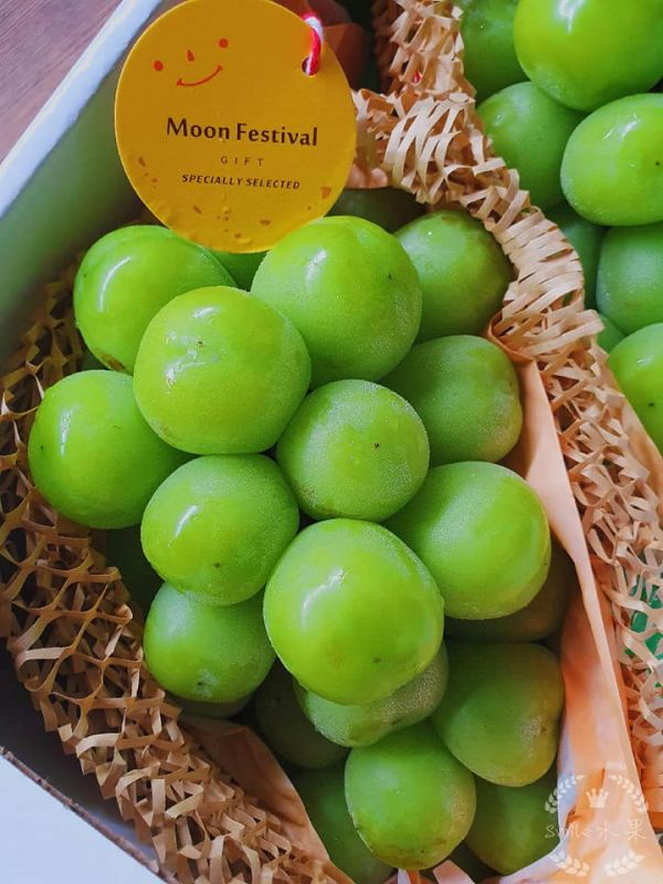長野 日本麝香葡萄