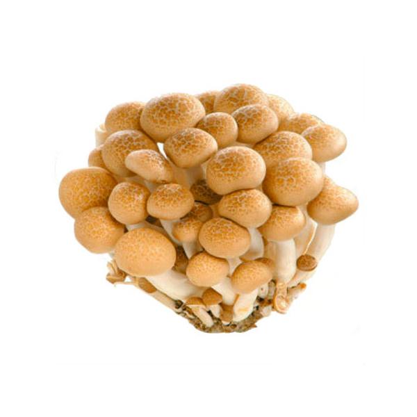 有機鴻禧菇130g-全素