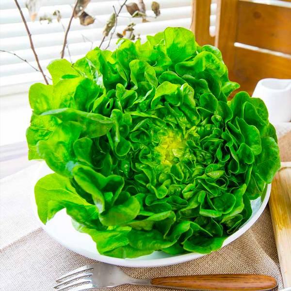 源鮮綠橡木萵苣150g