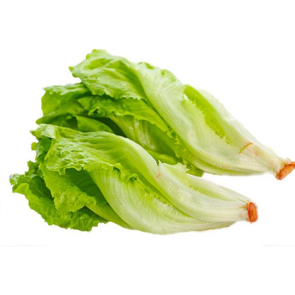 有機福山萵苣
