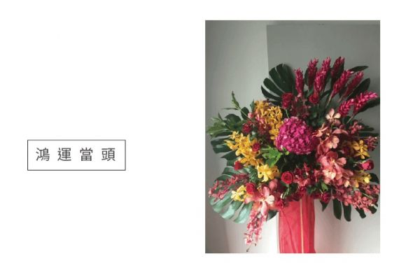 鴻運當頭-高架花籃 蝴蝶蘭 特色蘭花盆栽 設計感蘭花