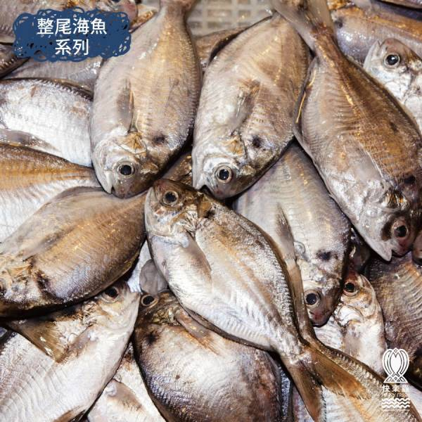 大肉鯽魚300g±10%(2尾)