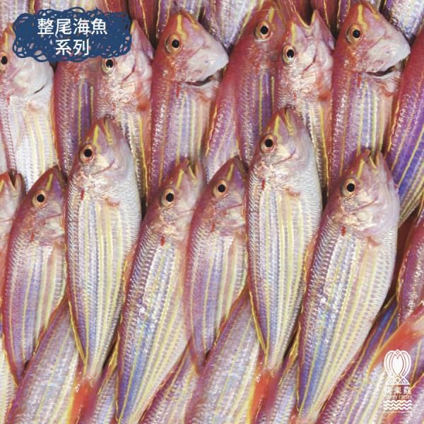 金線魚 300g±10%