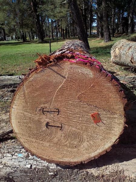 國外林場 產地直送 建材,原木,木皮板,木地板,森林,原木桌板