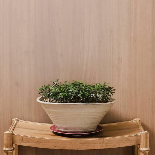 塗裝木皮板-曙光再現(直紋) 室內設計師推薦,木皮板,塗裝板,木皮不織布,室內裝潢設計材料,天然綠建材